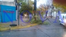 Hubo reclamos por �rboles y ramas ca�das y calles inundadas. En Berisso y Ensenada no hubo complicaciones solo pasacalles rotos por el viento (Foto: NOVA).
