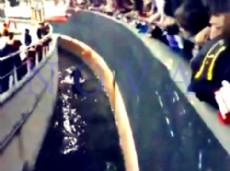 Luego del linchamiento, el �tripero� se par� al instante, sin presentar heridas de gravedad.