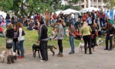 Feria Comunal Mascotera.
